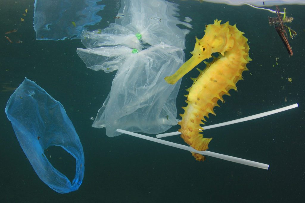 plastic in seas